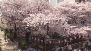 停止中:目黒川桜橋の桜ライブカメラと雨雲レーダー/東京都目黒区